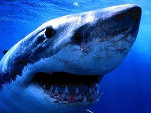 it's a scary, scary shark