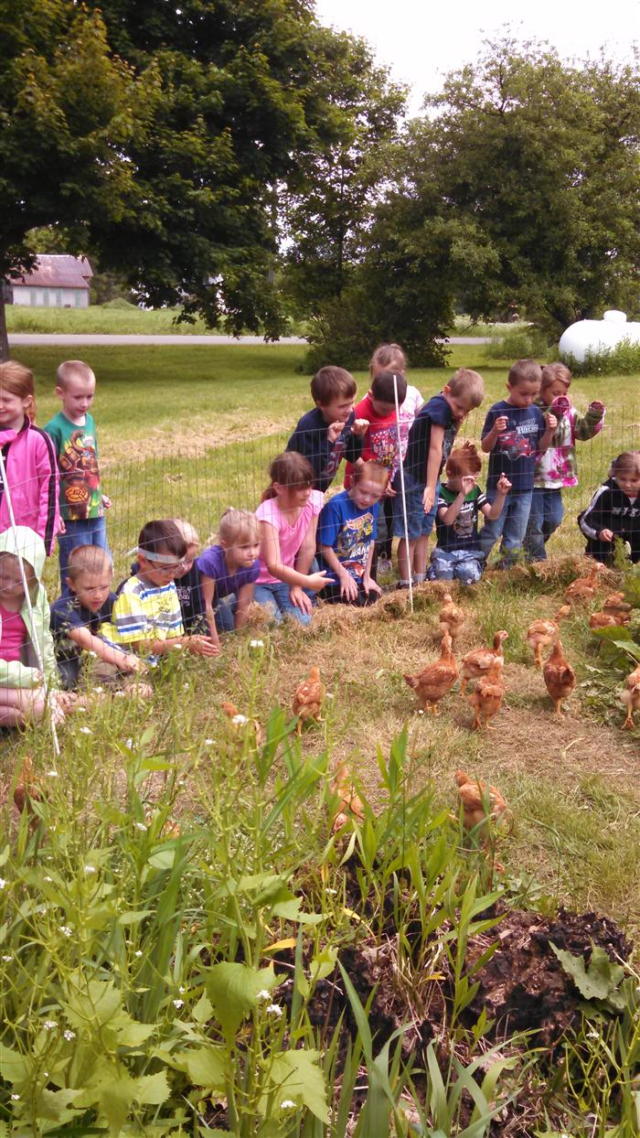 Elementary Home / Down on the Farm - Kindergarten visits ...